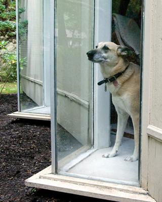 Silbersteins' dog Remy.